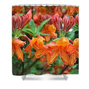 Crowned Creamsicles Shower Curtain