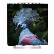 Crowned Pigeon Shower Curtain