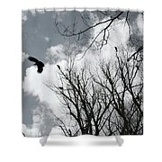 Crows In Cottonwoods Shower Curtain