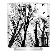Crows Roost 1 - Black And White Shower Curtain
