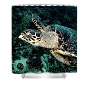 Cruising Hawksbill Shower Curtain
