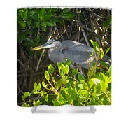 Cruising The Mangroves Shower Curtain