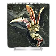 Crustacean On The Shore Shower Curtain