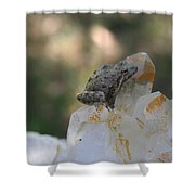 Crystal Frog Shower Curtain