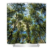 Crystal Lake Il Pine Grove And Sky Shower Curtain