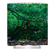 Crystal River Shower Curtain