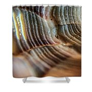 Crystals And Stones Shell 4721 Shower Curtain