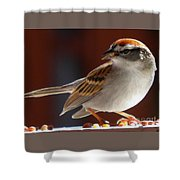 A Hungry Chipping Sparrow Shower Curtain