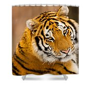 Cub Shower Curtain