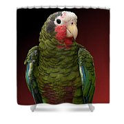 Cuban Amazon Parrot Shower Curtain