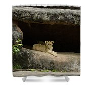 Cubs In Cave Shower Curtain