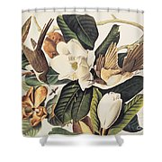 Cuckoo On Magnolia Grandiflora Shower Curtain