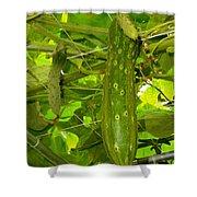 Cucumber On Tree In The Garden 1 Shower Curtain