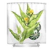 Cucurbita Foetidissima Shower Curtain
