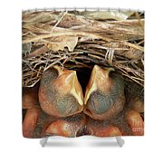 Cuddling Cardinals Shower Curtain