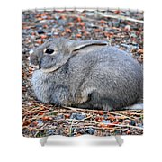 Cuddly Campground Bunny Shower Curtain