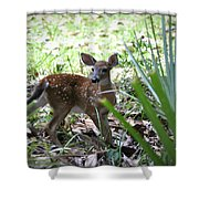 Cumberland Island Deer Shower Curtain