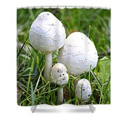 Cumberland Toadstools Shower Curtain