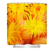 Cup Coral Shower Curtain