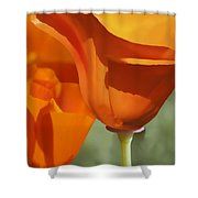 Cup Of Gold Shower Curtain
