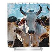 Cupcake Cows Shower Curtain