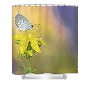 Cupido Argiades Shower Curtain