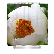 Cupping Beauty  Shower Curtain