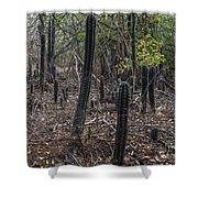 Curacao - Blooming Cacti In The Forest Shower Curtain