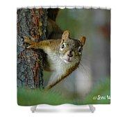 Curious Alaskan Red Squirrel Shower Curtain