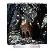 Curious Bambi Shower Curtain