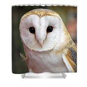 Curious Barn Owl Shower Curtain