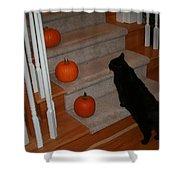 Curious Black Cat Shower Curtain