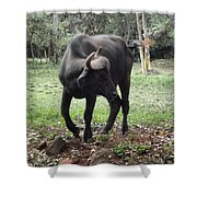 Curious Buffalo Shower Curtain