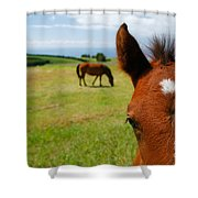 Curious Colt Shower Curtain