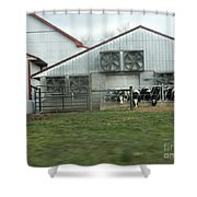 Curious Cows Shower Curtain