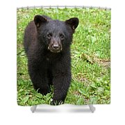 Curious Cub Shower Curtain