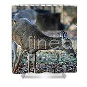 Curious Deer Shower Curtain