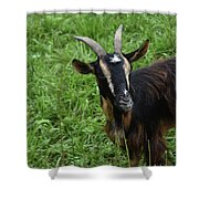 Curious Goat With Very Long Shaggy Fur Shower Curtain