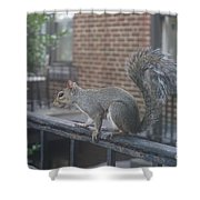 Curious Gray Squirrel  Shower Curtain