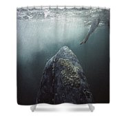 Curious Gray Whale And Tourist Shower Curtain