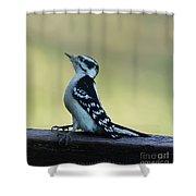Curious Hairy Woodpecker Shower Curtain