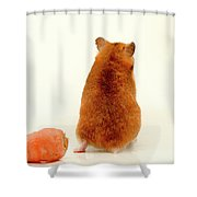 Curious Hamster 1 Shower Curtain