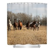 Curious Horses Shower Curtain
