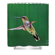 Curious Hummer Shower Curtain