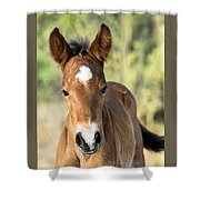 Curious Little Colt  Shower Curtain