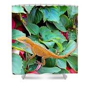 Curious Lizard Shower Curtain