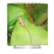 Curious Lizard I Shower Curtain