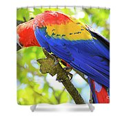 Curious Macaw Shower Curtain