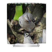 Curious Mockingbird Shower Curtain