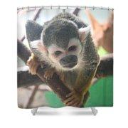 Curious Monkey Shower Curtain